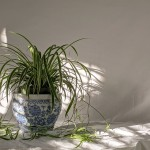 wpid-Apartment-Friendly-Houseplants-to-Add-to-Your-Must-Grow-List.jpg